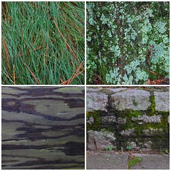 photowalk patterns