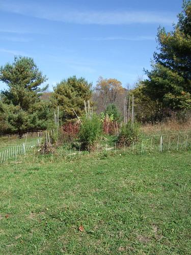 Garden Remnants