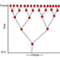 Heredity Tree