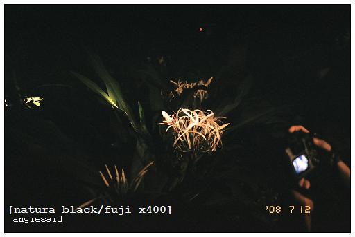 b-20080712_natura_096_iso4_015.jpg