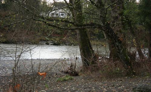 Big Trees, Normal River