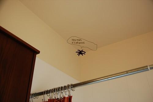 showerspider.jpg