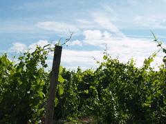 Vineyards for sale in Leelanau County