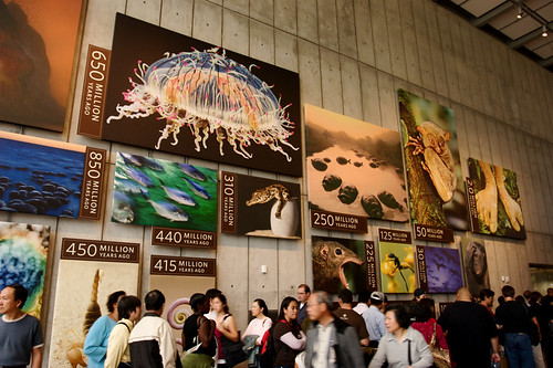 California Academy of Sciences Reopening