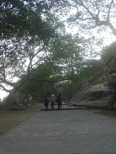 Elephanta Caves象窟1-27百年菩提樹1-1