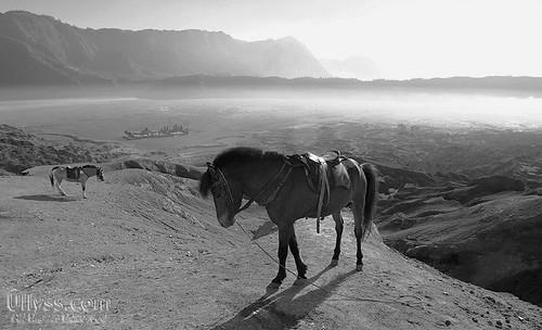 Tenggerese Horses of Mount Bromo