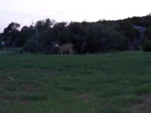 Deer_Ghost