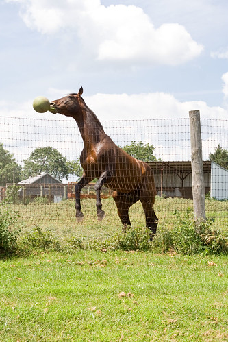 "Horse ""Playing"""