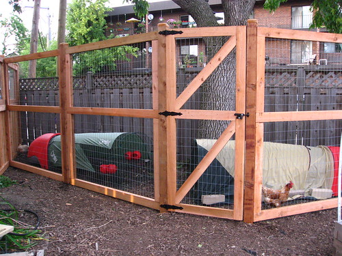 The new chicken run with the Eglus inside.