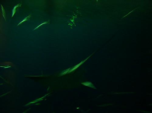 blurry-manta