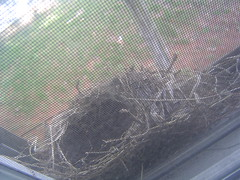 Empty Nest - April 14, 2008