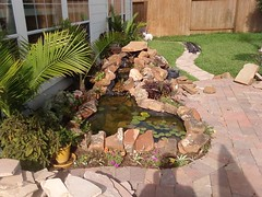 Another View of the Pond and Waterfall