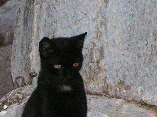 El gato triste (detalle)