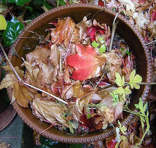 Herbstlicher Blumenkübel
