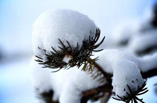 Offsprings of Winter