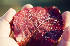 Frosted Leaf In Hand by aplseed photography