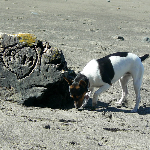 Ruby at Albion River Beach