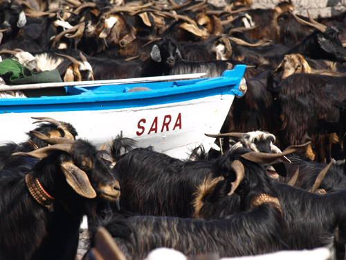 The Bathing of the Goats