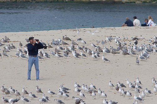 Gull Photog by you.