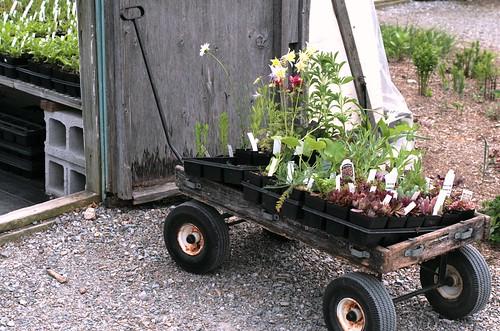 wagon of plants