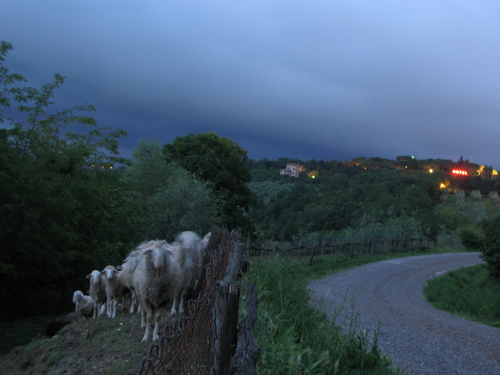 Sheep @ night