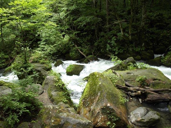 奥入瀬渓流 13