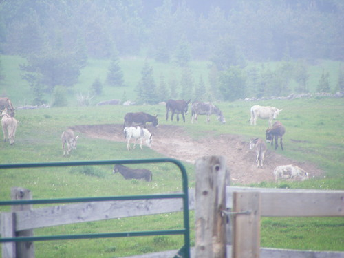 The Donkey Sanctuary of Canada