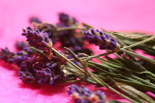 Another shot of the lavender