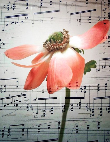 Flower with music by tanakawho.