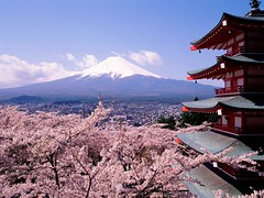 fuji japan cherry