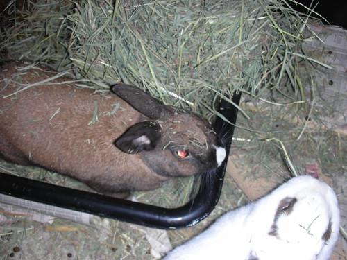 My Hay!