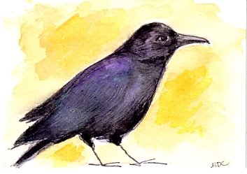 ATC - Crow for Spiced Coffee