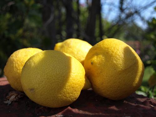 Simply Lemons