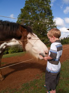 Feeding a horse carrots is fine with the owners permission.