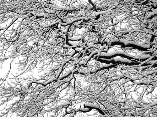 Winter Wonderland III
