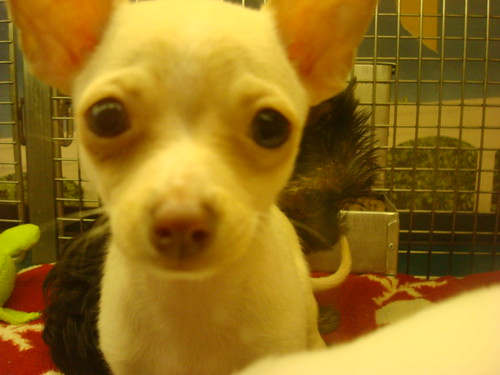 eyeball puppy