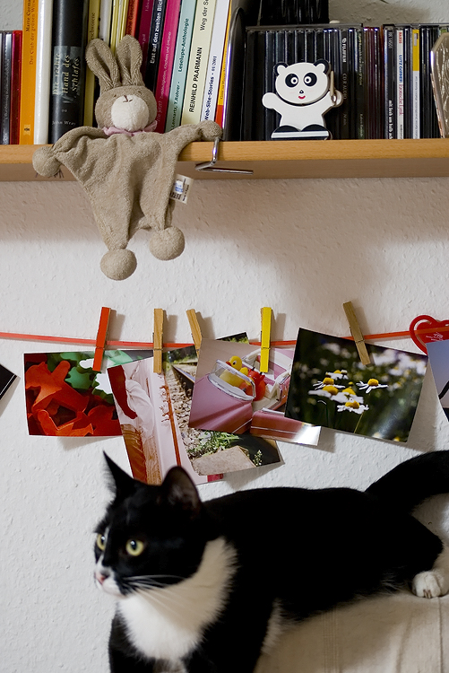 Moritz Day # 151 / 365 02. August 2008