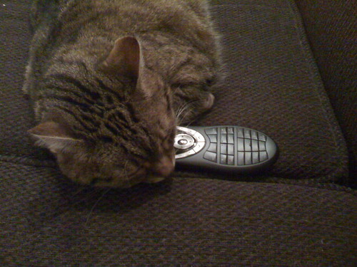 Cat and Remote Control