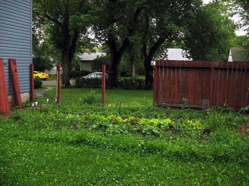 Look ma!  No fence!