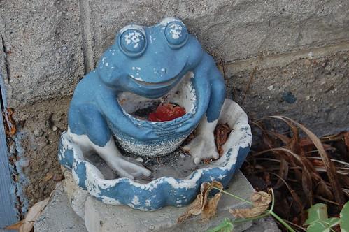 Creepy frog