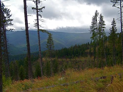 Open ridge along trail 578