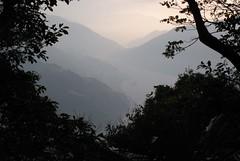 由丸田砲台處眺望大安溪河谷,視野早被樹林遮蔽