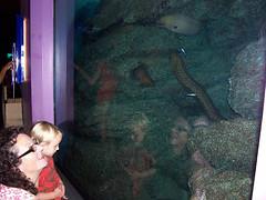 Ocean World 3 Ang Tash eels