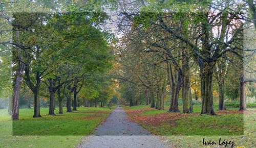 Way under autumn