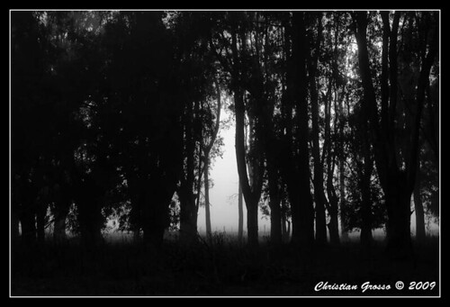 "Niebla • <a style=""font-size:0.8em;"" href=""http://www.flickr.com/photos/20681585@N05/3329008585/"" target=""_blank"">View on Flickr</a>"