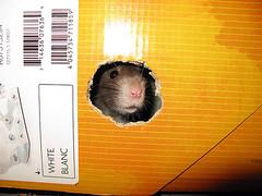 Rat Toy