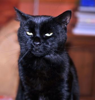 Mischief_is_not_amused
