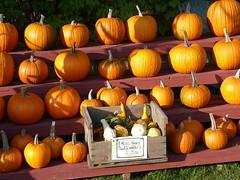 Autumn inventory