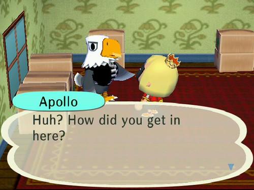 New Townie Apollo