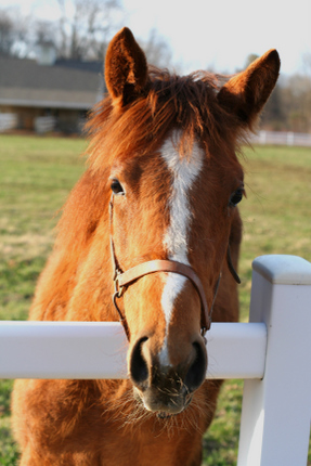 horse4209